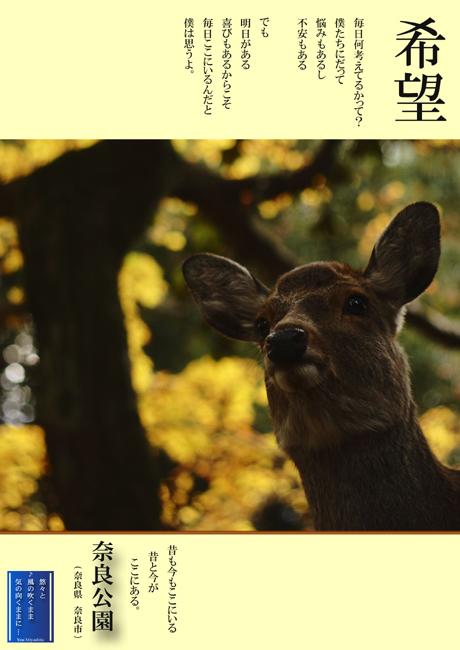 奈良公園so.jpg